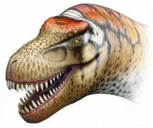Zhuchengtyrannus head