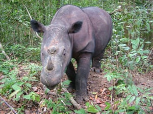 IUCN meeting: 100 most critically endangered species