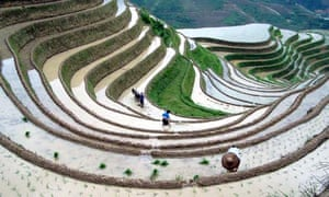 Rice paddies in China