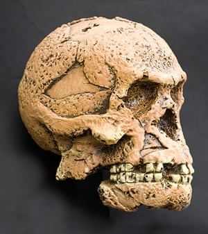 Ten best: Homo erectus. Humanoid skull reconstruction.