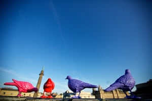 Liverpool biennial: Belonging by Patrick Murphy, a series of 150 brightly coloured pigeons
