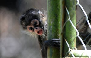 24 hours in pictures: A baby monkey at the Rosy Walter zoo