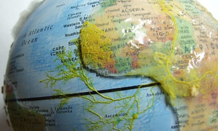 Slime mould grows on agar continents between oat flakes in Andrew Adamatzky's globe