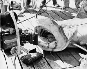 Jaws: Spielberg lines up a shot