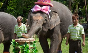 Elephants on the drums taking part in the Animal Orchestra. The orchestra has members including a chimp on drums, elephants on big drums and chimes, a hippo on bass and baboons on flute.   They will perform on stage officially for the first time over China's National Day Holiday