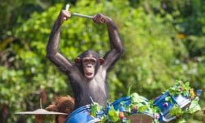 Chimp on drums.