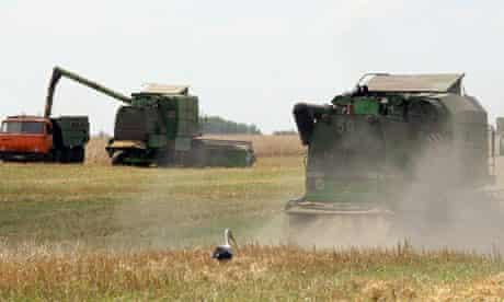 Harvest in Chernigov, Ukraine