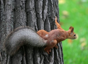 week in wildlife: A squirrel (Sciuridae) sits on a tree during an autumn day