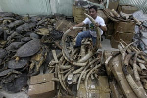week in wildlife: Illegal Ivory trade in the Philippines