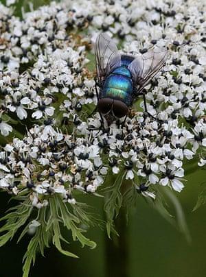week in wildlife: Valley of Flowers National Park