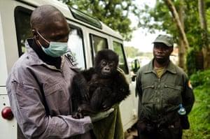 week in wildlife: Virunga National Park