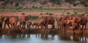 week in wildlife: elephants