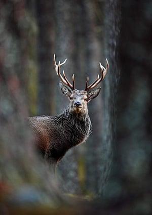 BWPA: 2012 British Wildlife Photography Awards