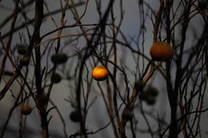 24 hours: Alvaiazere, Portugal: A burnt orange tree after a fire
