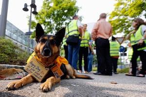 24 hours: Munich, Germany: A German Shepherd dog called Nele at a strike