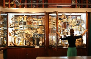 24 hours: London, England: Display cabinets at The Grant Museum of Zoology