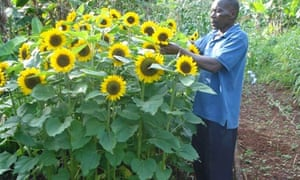 Smallholder flower grower