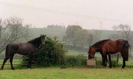 horse grazing on green belt land
