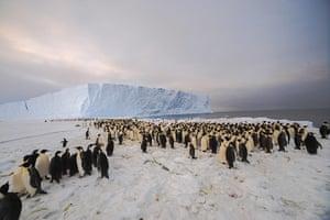 Penguins in Antarctica: 9,000-strong emperor penguin colony on Princess Ragnhild Coast