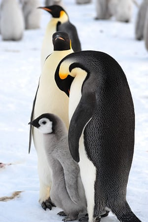 First Contact With Huge Antarctica Emperor Penguin Colony