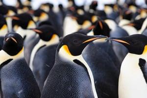 Penguins in Antarctica: 9,000-strong emperor penguin colony on Antarctica's Princess Ragnhild Coast