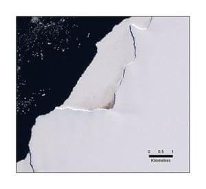 Penguins in Antarctica: Satellite view