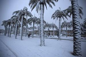 Snow in Jerusalem: A Palestinian man walks near palm trees as snow falls