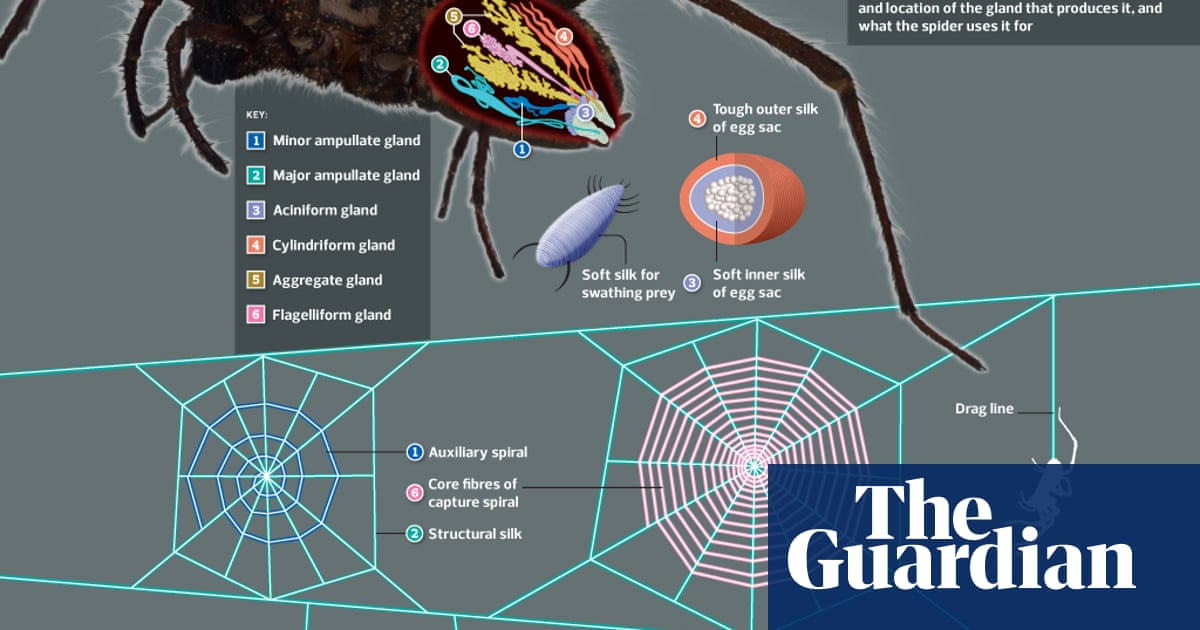 Untangling the web: how spiders use their silk – graphic
