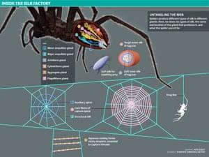 Spider silk graphic