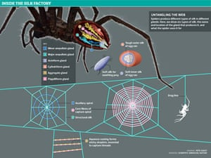 Spiders graphic