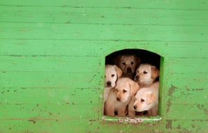24 hours: Puppies sit in kennel at a frontier guards' cynology centre