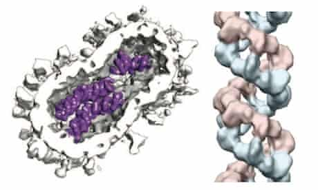 The structure of the flu virus particle and a detail from the helical architecture of one of its RNA genes