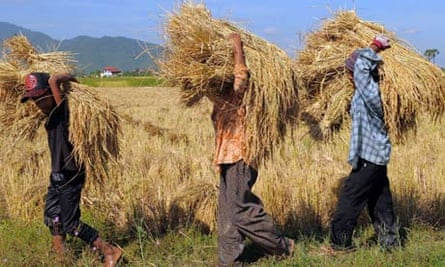 Asia-environment-agriculture-