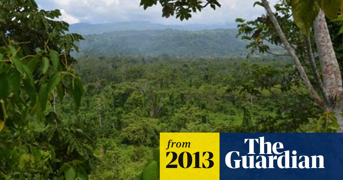 Amazon Rainforest Is Home To 16 000 Tree Species Estimate Suggests Amazon Rainforest The Guardian