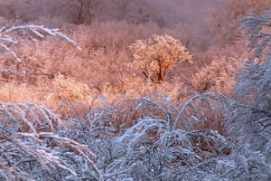 Week in Wildlife: snow covered trees at the forest of Vizzavona in Corsica