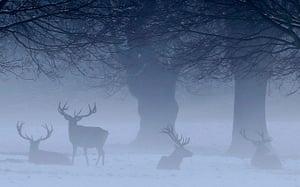 Week in Wildlife: Deer graze on Wollaton Park in Nottingham