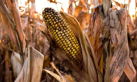 Southern Minnesota Spared From Drought