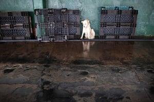FTA: Rodrigo Abd: A dog waits for its owner