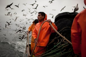FTA: Rodrigo Abd: Seabirds hover nearby as fishermen sail a boliche off the coast