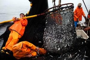 FTA: Rodrigo Abd: Fishermen unload a net full of anchovies