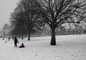 readers snow pix: Raised Maple