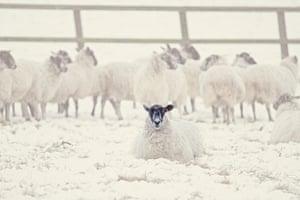 Readers' snow pictures: Baaaaa or Brrrrrrr!