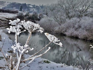 Readers' snow pictures: Frosted hogweed seed heads