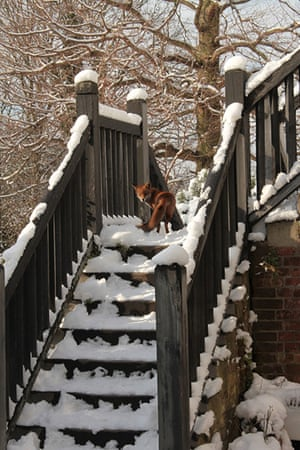 Readers' snow pictures: Untitled