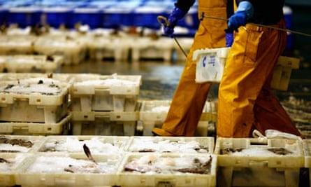 Fishermen Sort Catch At Peterhead Harbour