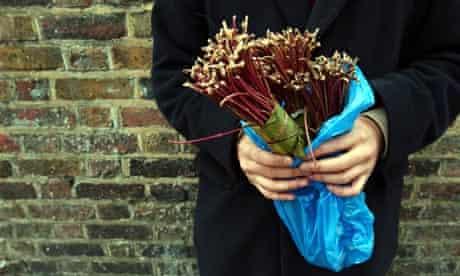 Bundles of the drug qat