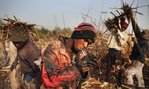Dembele, a day labourer, lights a cigarette at a sugar cane plantation in Siribala, Mali.
