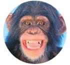 body chimp