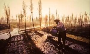 a farmer hand waters his crops