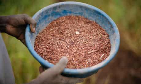 bowl of grain